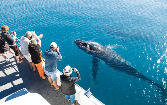 Hervey-Bay-Whale_Watch-2015