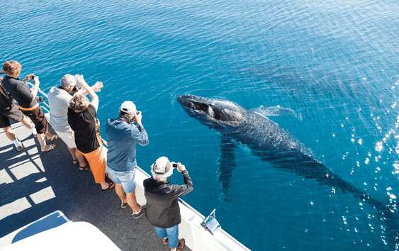 2016 Hervey Bay Whale Watch