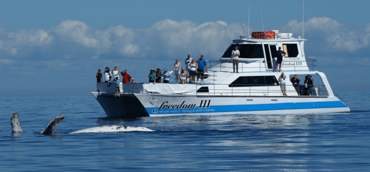 Freedom III - Whale Watch Tour Hervey Bay