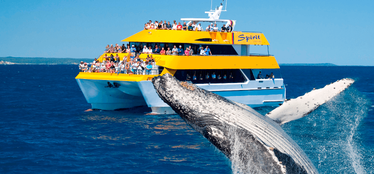 Spirit of Hervey Bay Humpback Whale Boat Cruise