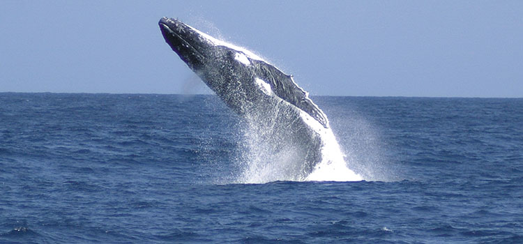 Tangalooma Whale Watch Tour