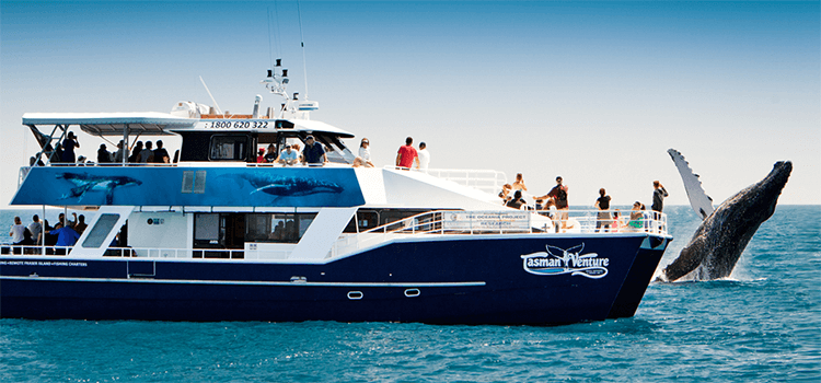 Tasman Venture Whale Watching Cruise Vessel