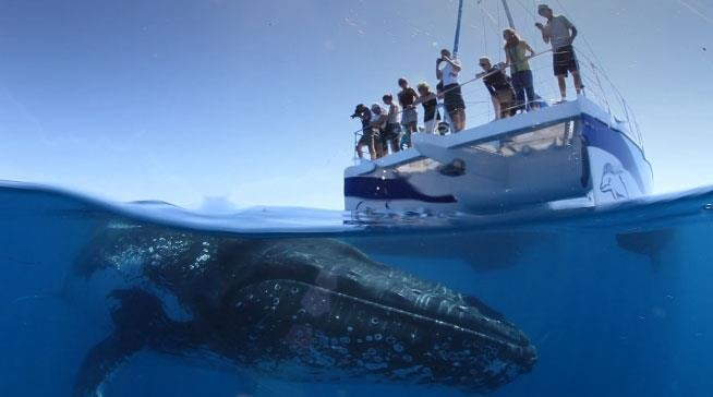 Blue Dolphin Marine Tours - Whale Watching