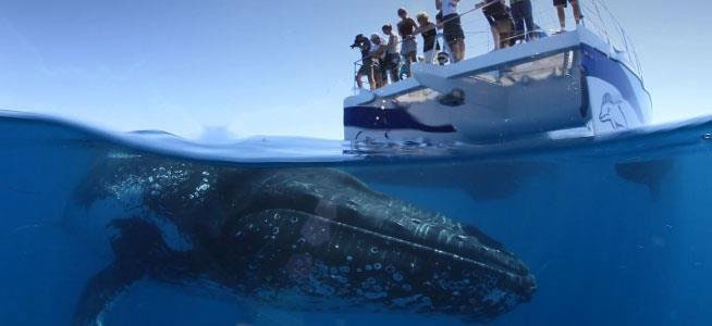 Hervey Bay Whale Tours Blue Dolphin Marine Tours