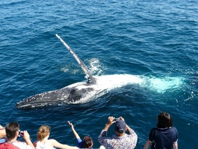 Coolangatta Whale Watch Gold Coast