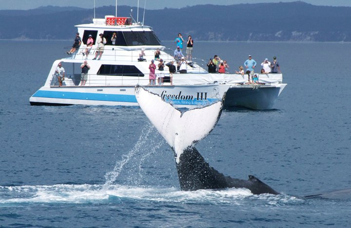 Freedom III - Hervey Bay Whale Watching