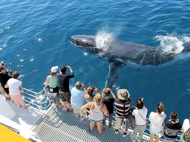 Spirit of Hervey Bay Whale Watching