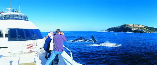 Tangalooma Resort Whale Watch Adventure