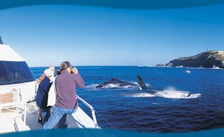 Tangalooma Resort Brisbane Whale Watching Cruise