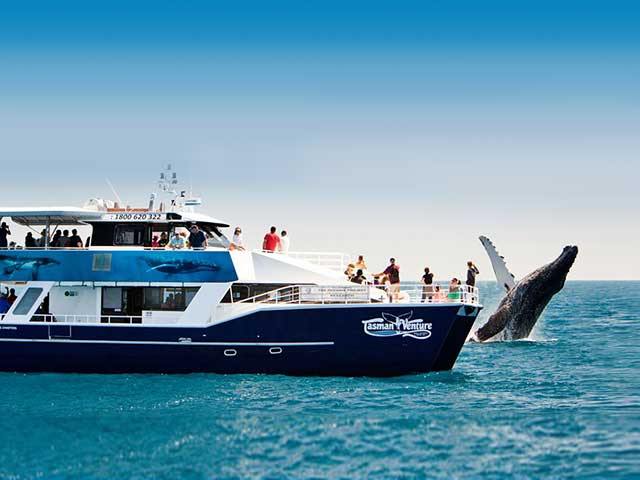 Tasman whale watch hervey bay