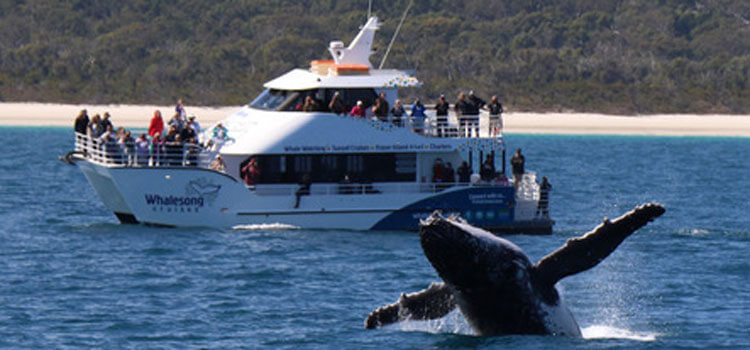 whalesong Whale Watch Tour Hervey Bay