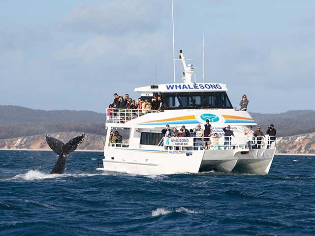 Whalesong Harvey Bay Whale Watching