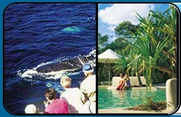 Kingfisher Bay Resort - Hotel plus whales