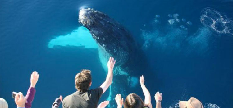 Tasman Venture Hervey Bay Whale Watch Cruise Package Deals