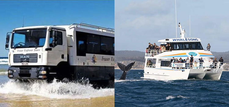 Whalesong whale watch and Fraser Island tour